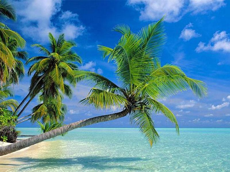 Choose Cayman