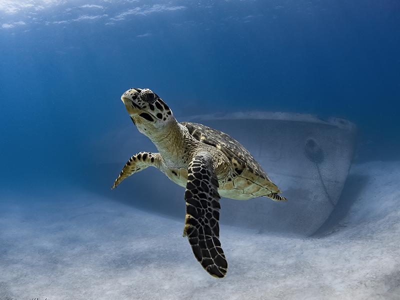 Kittiwake Cayman