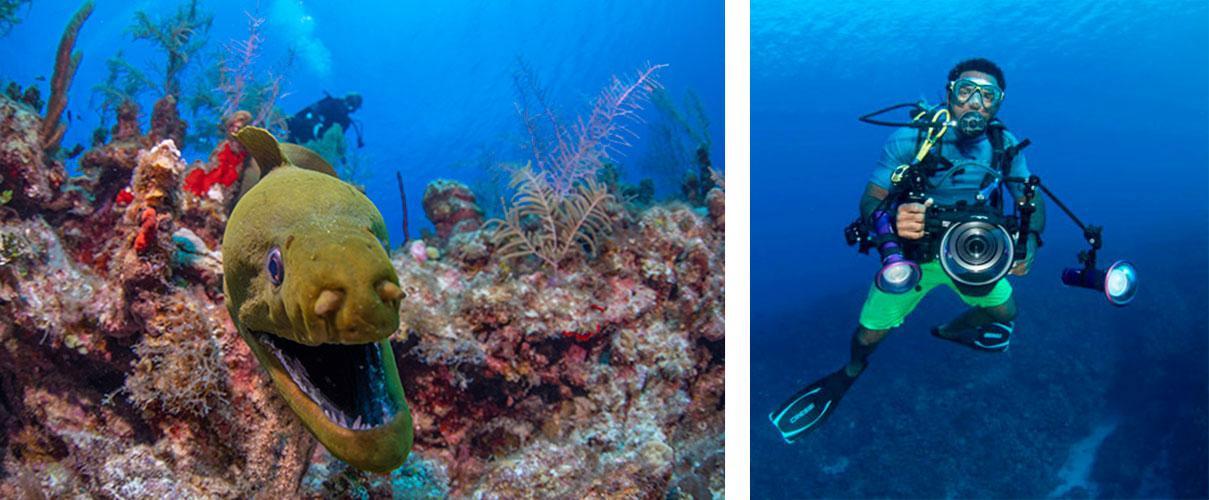 Grand Cayman Scuba Diving eel